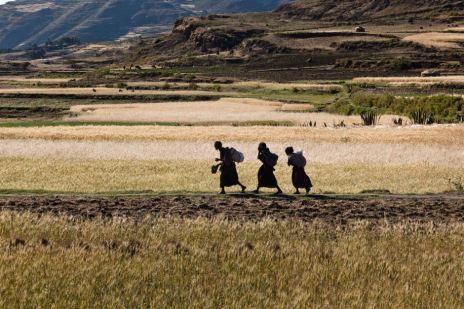 Ethiopia land grabbing
